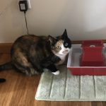 Tdibit & Water Fountains For Cats