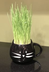 The Cat Ladies Organic Cat Grass Kit